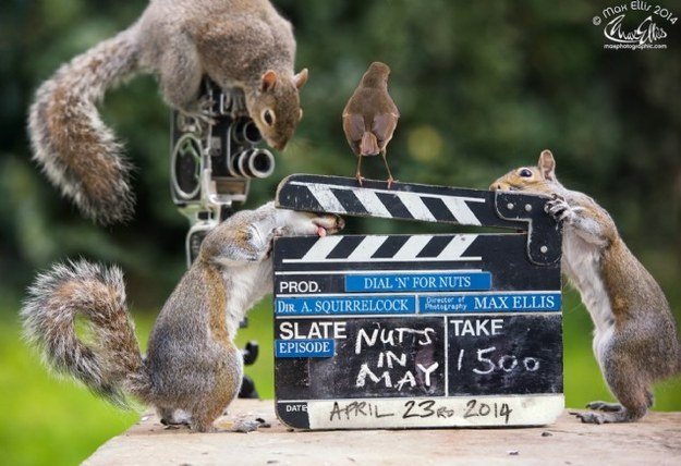 In Ellis' world, the squirrels don't just lift weights. They also make movies.