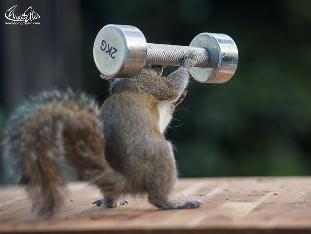Photoshoot day or not, Ellis said always he sets out food for his squirrel friends.