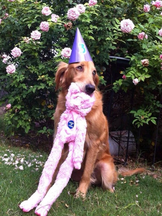 """""""ANOTHER long pink toy? HOW ORIGINAL."""""""