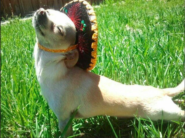 16 Dogs Who Want You To Rethink That Cinco De Mayo Sombrero