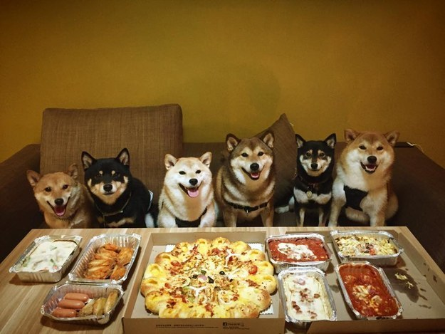 16 Photos Of The Most Adorable Shiba Family