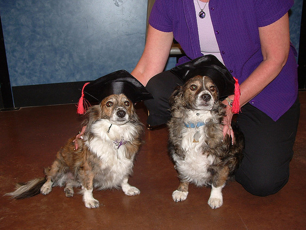 27  Dogs Who Are So Over Graduation Day