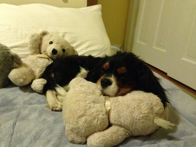 """The correct pillow is ESSENTIAL for proper cuddling."""