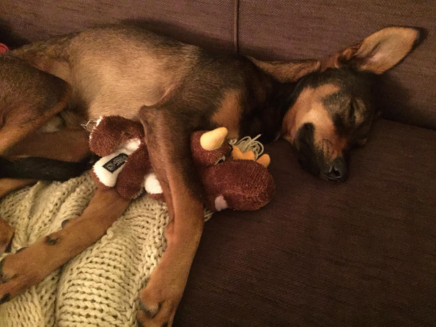 """Yes, I'm a grown up pup, but that doesn't mean I still can't snuggle with my teddy."""