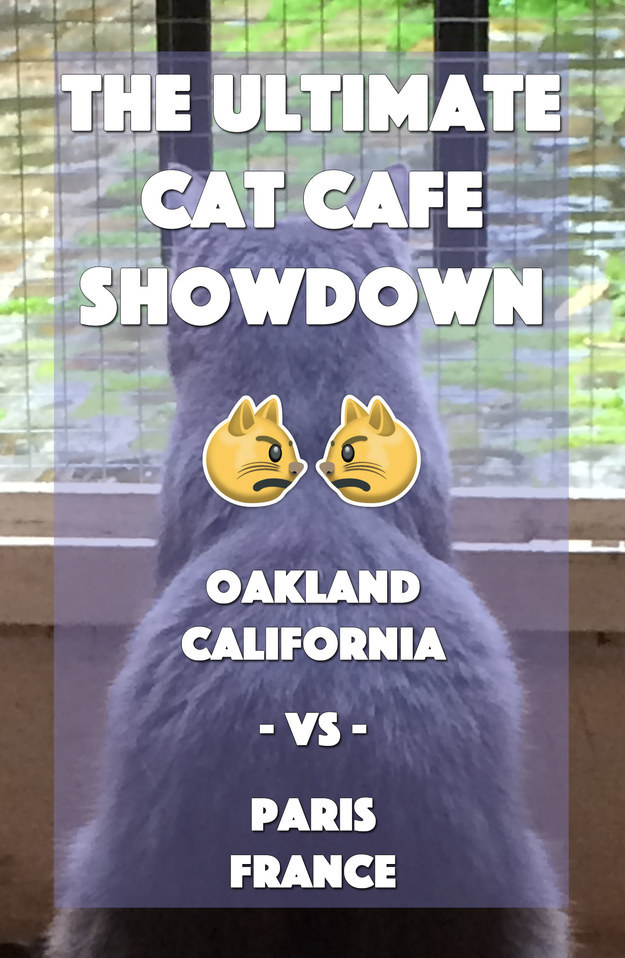 The Differences Between European And America Cat Cafés