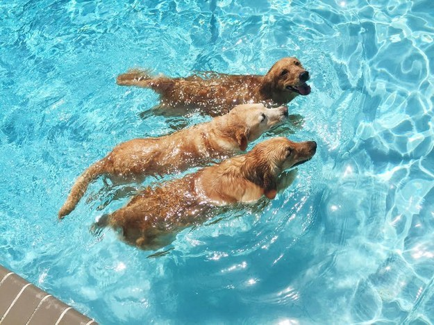 25 Dogs Who Are Living Their Best Lives