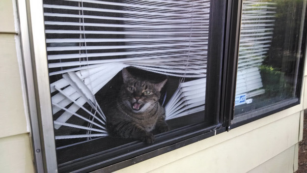 This cat hates blinds.