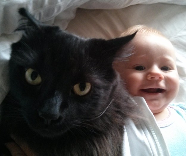 This cat hates this baby.