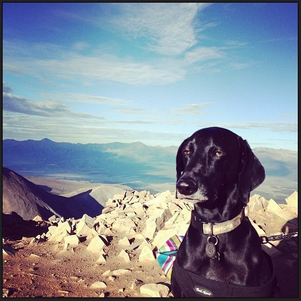 This dog who is over fucking mountains.