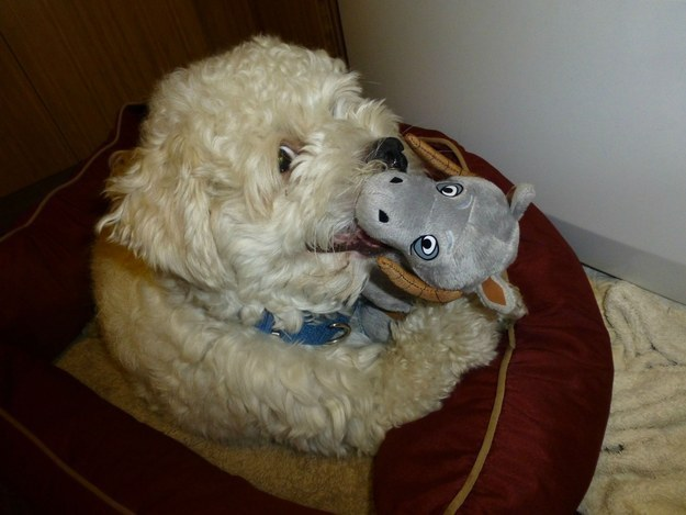 This fearsome Wampa who's having a TaunTaun snack.