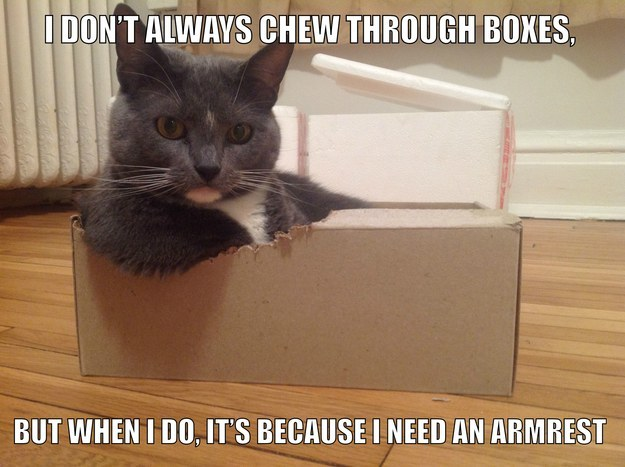 24 Cats Who Have Accomplished More Than You Will Ever Accomplish In Your Lifetime