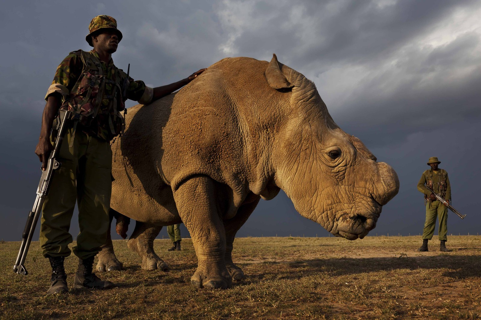 This Is The Last Remaining Male Northern White Rhino In The World - BuzzFeed News