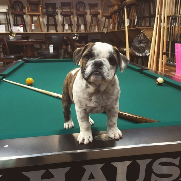 39 Delightful Puppies For Anyone Who's A Little Blue