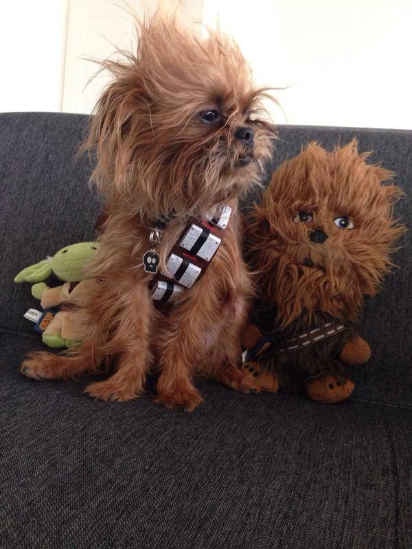 This real life Chewbacca hanging with his pal.