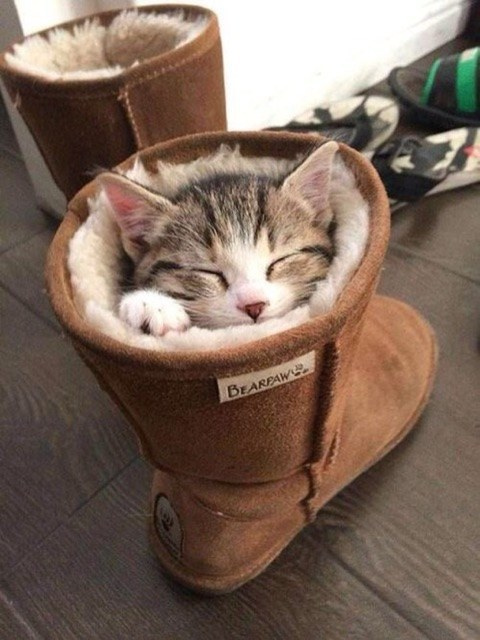 13 Cuties Who Understand How Much You Need A Nap Right Now