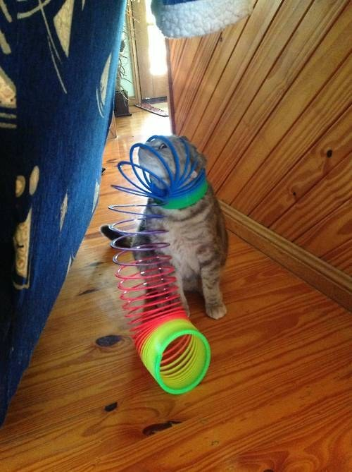 This cat who just wanted to play with the slinky: