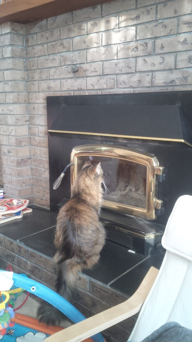 This cat who doesn't know what an actual window looks like:
