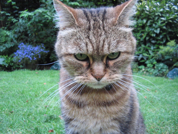 17 Cats Who Are Totally Sick Of Your Games