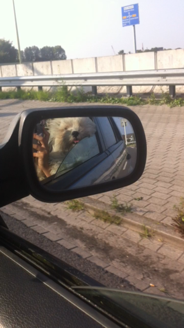 """Objects in mirror are CUTER than they appear, am I right guys?!"""