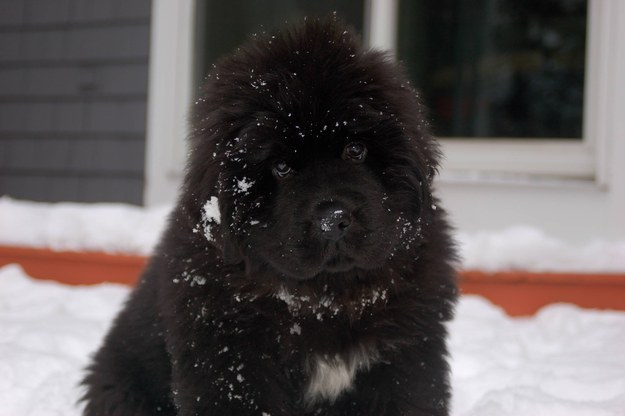 """THIS SNOW IS NO MATCH FOR MY BIG PUPPY FLUFF."""