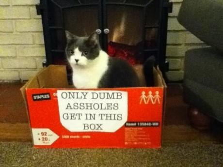And this cat who probably wishes it could read:
