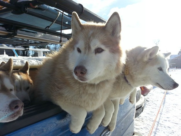 """Who needs a truck when you've got four fluffy paws, AMIRITE?"""