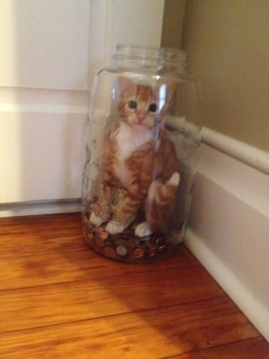 This cat who was trying to steal money and got caught: