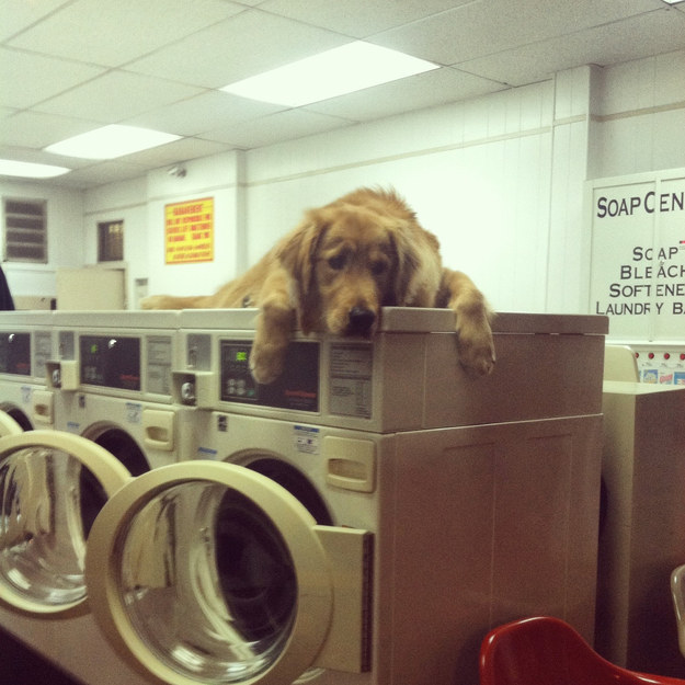 """I came here to do laundry but literally what."""