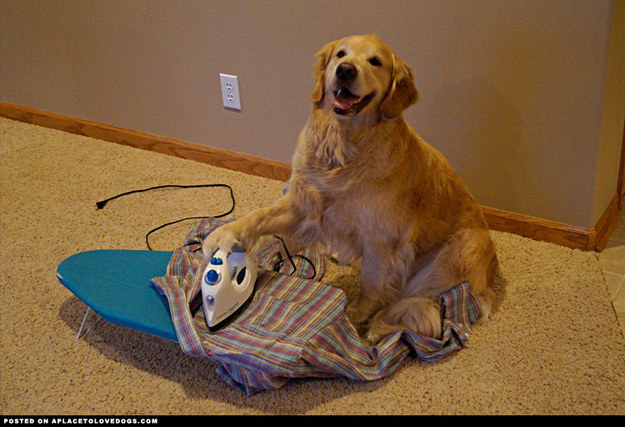 """I AM IRONING YOUR SHIRT ARE YOU HAPPY."""