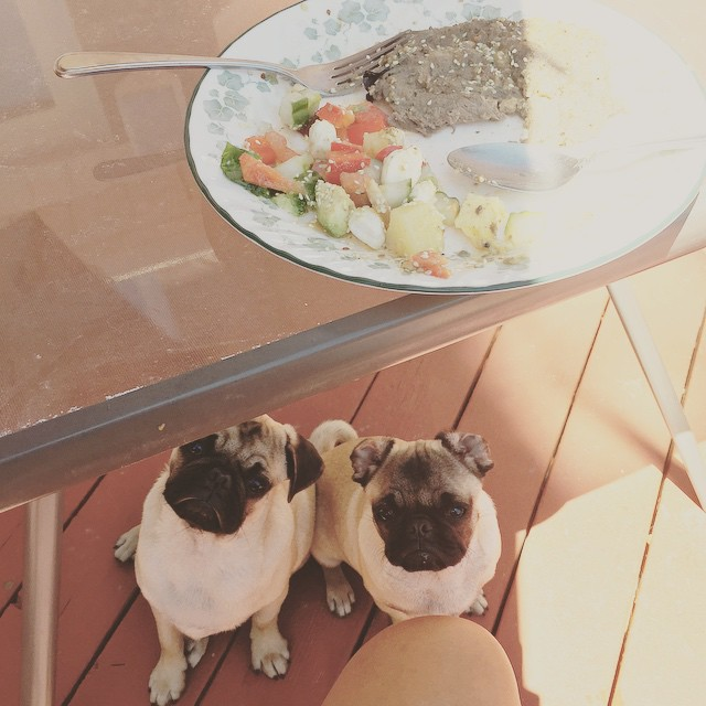19 Pugs Who Just Get You