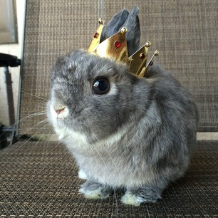 Your bun knows she is the highest form of royalty and expects you to treat her such.
