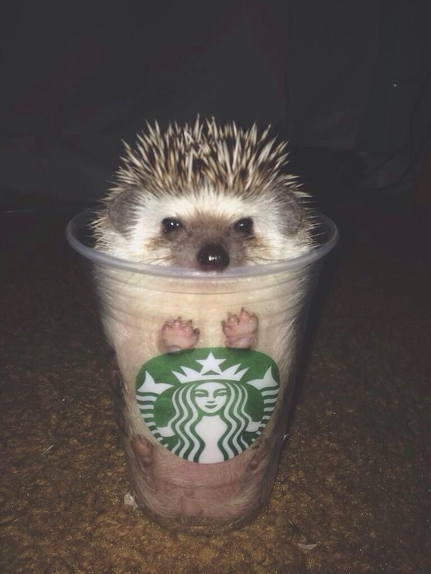 """I am not frappucino. I am hedgehog."""