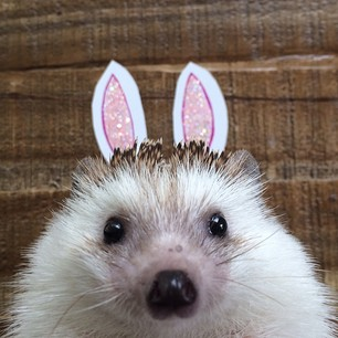 """I am not rabbit. I am hedgehog."""
