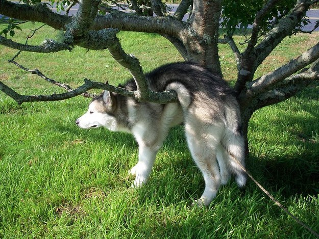 """""""You told me not to climb the trees, but I feel good about this choice."""""""