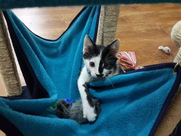 """So, I'm pretty sure this is the correct way to use a hammock."""