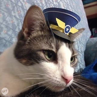 …and ~take flight~ into Tiny Hats On Cats.