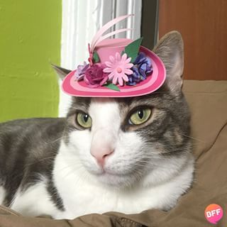 "28 Reasons ""Tiny Hats On Cats"" Is The Instagram That's Been Missing From Your Life"