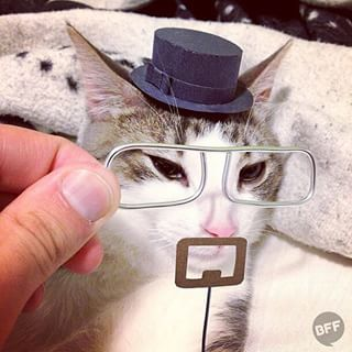 Cats like to dress up as their favorite TV characters, but lack the dexterity to make their own costumes.