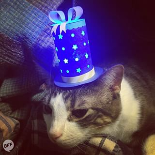 No cat should go to bed without a nightlight (in the form of a hat).