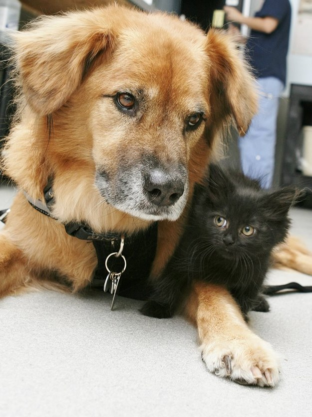 This teeny kitten who wants everyone to know that cats and dogs can be best buds.