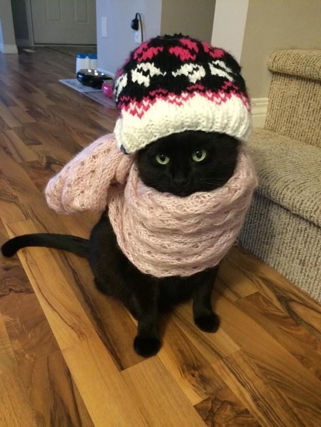This cat who is demonstrating proper winter bundling.