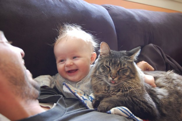 31 Pictures That Will Restore Your Faith In Cats