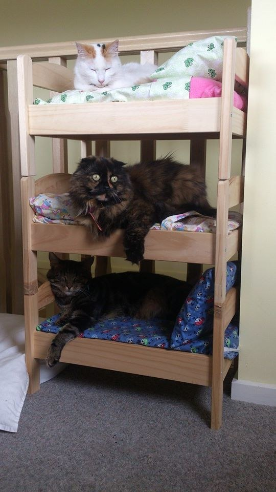 These adorable bunk bed buddies.