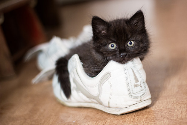 And this clever little one who keeps his human from leaving by occupying his shoes.