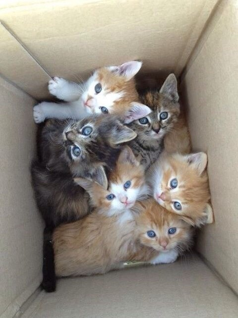 The cutest box in existence.