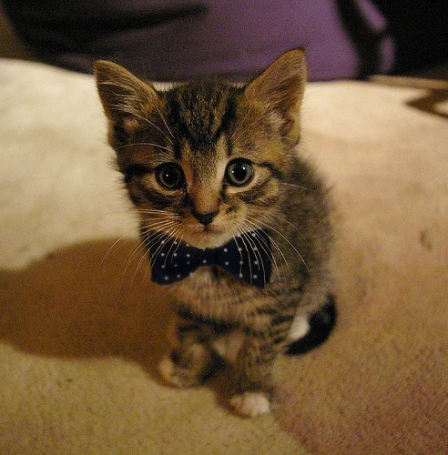 This classy fellow and his polka-dotted bow tie.