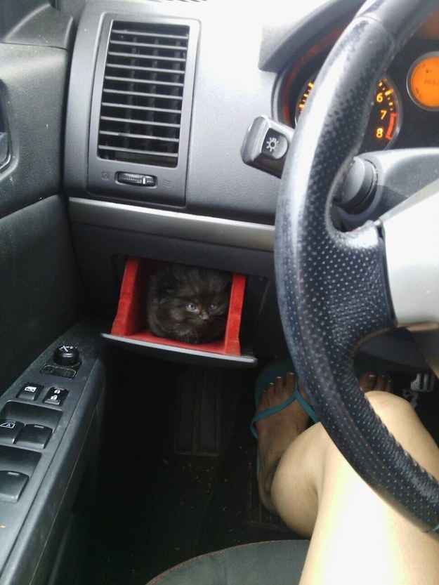 And this kitten who found a new use for the glove compartment.