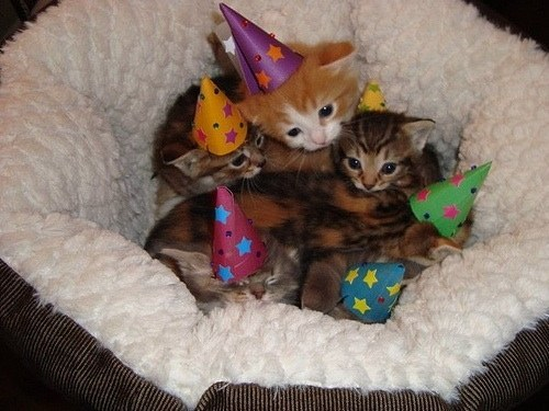 These kittens who threw the cutest birthday party in the universe.