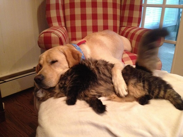 These best friends who never miss their afternoon nap together.