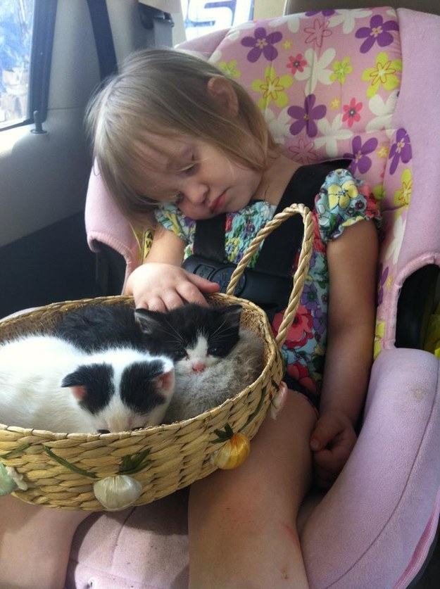 BONUS: A KITTEN BASKET WITH A SLUMBERING BEBE.